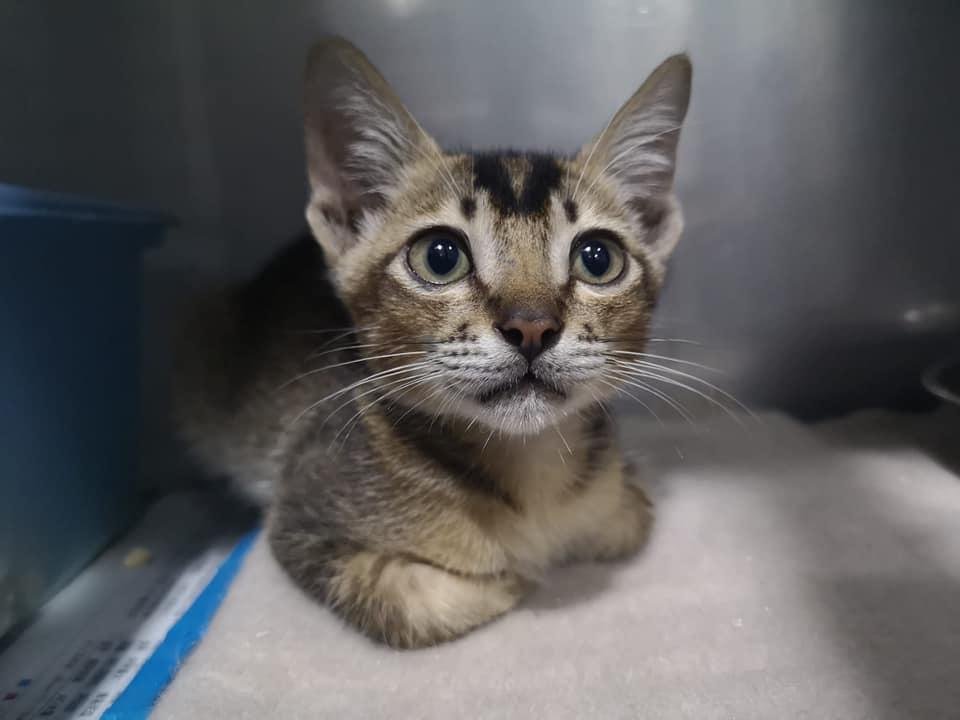 Adoption Tails: Kaka