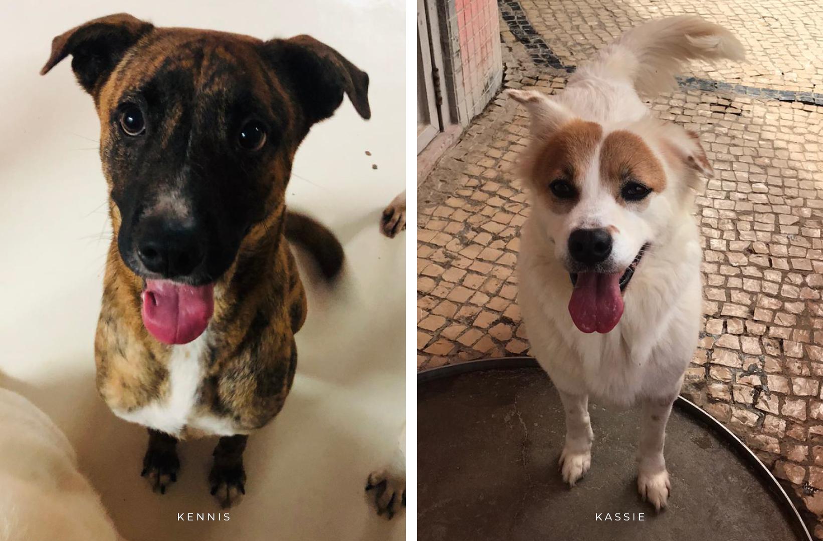 Adoption Tails: Kennis and Kassie